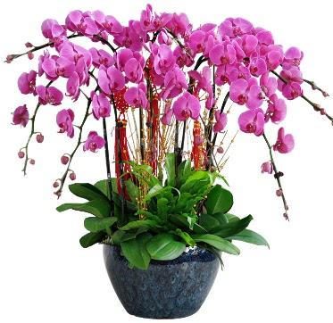 9 dallı mor orkide  Muğla çiçek yolla