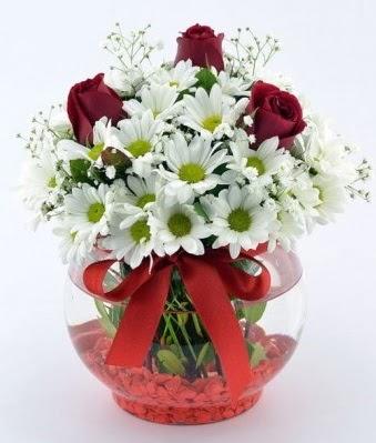 Fanusta 3 Gül ve Papatya  Muğla çiçek mağazası , çiçekçi adresleri