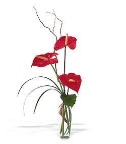 Muğla çiçek servisi , çiçekçi adresleri  cam yada mika Vazoda 3 adet  antoryum
