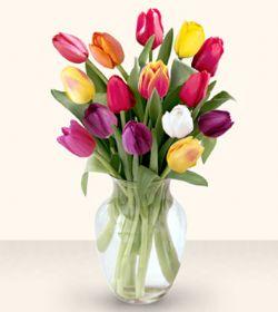 Muğla kaliteli taze ve ucuz çiçekler  13 adet cam yada mika vazoda laleler