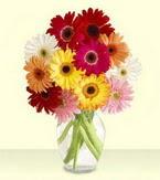 Muğla çiçekçiler  cam yada mika vazoda 15 özel gerbera