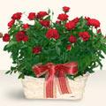 Muğla internetten çiçek siparişi  11 adet kirmizi gül sepette
