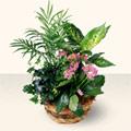 Muğla uluslararası çiçek gönderme  5 adet canli çiçek sepette