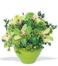 cam yada mika vazoda 5 adet orkide   Muğla internetten çiçek satışı