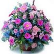 karisik mevsim kir çiçekleri  Muğla çiçek siparişi vermek