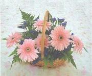 gerbera çiçeklerinde sepet   Muğla online çiçek gönderme sipariş
