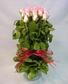 13 adet pembe gül silindirde   Muğla online çiçek gönderme sipariş