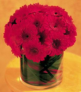 Muğla anneler günü çiçek yolla  23 adet gerbera çiçegi sade ve sik cam içerisinde