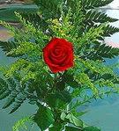 1 adet kirmizi gül buketi   Muğla yurtiçi ve yurtdışı çiçek siparişi