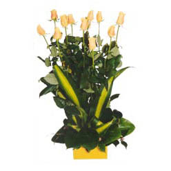 12 adet beyaz gül aranjmani  Muğla hediye çiçek yolla