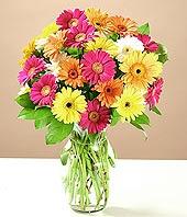 Muğla çiçek satışı  17 adet karisik gerbera