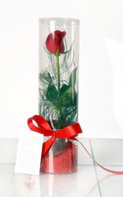 Muğla online çiçek gönderme sipariş  Silindir vazoda tek kirmizi gül