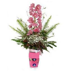 Muğla hediye sevgilime hediye çiçek  cam yada mika vazo içerisinde tek dal orkide çiçegi