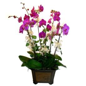 Muğla çiçek yolla , çiçek gönder , çiçekçi   4 adet orkide çiçegi
