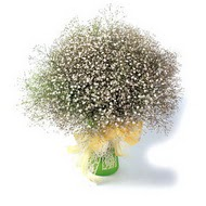 Muğla ucuz çiçek gönder  cam yada mika vazo içerisinde cipsofilya demeti