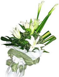 Muğla çiçekçi mağazası  3 dal kazablanka çiçegi ve yesillikler