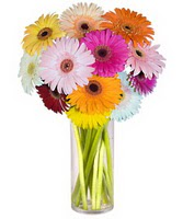 Muğla güvenli kaliteli hızlı çiçek  Farkli renklerde 15 adet gerbera çiçegi