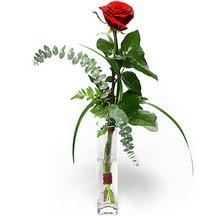 Muğla çiçek yolla  Sana deger veriyorum bir adet gül cam yada mika vazoda