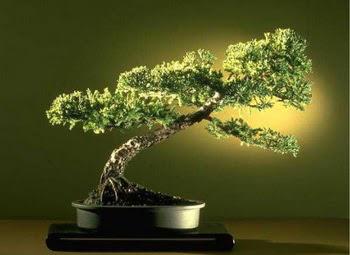 ithal bonsai saksi çiçegi  Muğla çiçek online çiçek siparişi