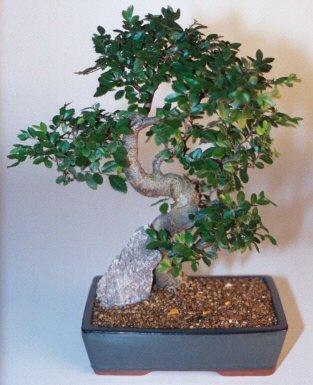 Muğla çiçek siparişi vermek  ithal bonsai saksi çiçegi  Muğla çiçek servisi , çiçekçi adresleri