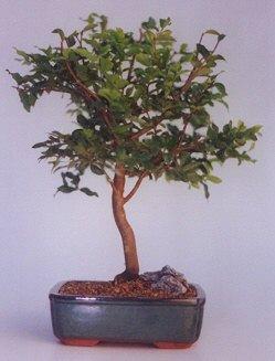 Muğla anneler günü çiçek yolla  ithal bonsai saksi çiçegi  Muğla çiçek gönderme