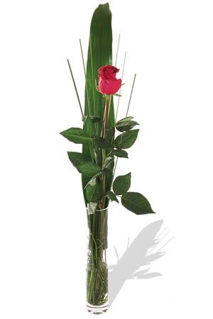 1 adet cam vazo içerisinde kirmizi gül  Muğla 14 şubat sevgililer günü çiçek