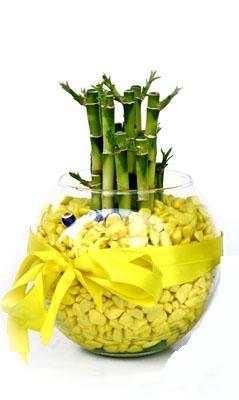 cam fanus içerisinde bambo  Muğla çiçek mağazası , çiçekçi adresleri