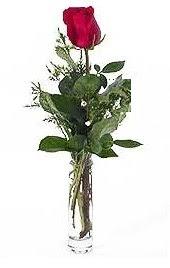 Vazo içerisinde 1 adet kirmizi gül  Muğla İnternetten çiçek siparişi