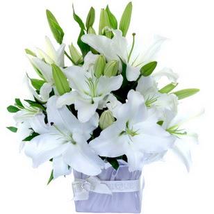 Muğla online çiçek gönderme sipariş  2 dal cazablanca vazo çiçeği