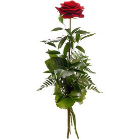 Muğla internetten çiçek satışı  1 adet kırmızı gülden buket
