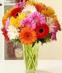 Muğla çiçek , çiçekçi , çiçekçilik  15 adet gerbera çiçek vazosu