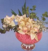 Muğla ucuz çiçek gönder  Dal orkide kalite bir hediye