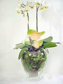 Muğla uluslararası çiçek gönderme  Cam yada mika vazoda özel orkideler