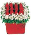 Muğla cicek , cicekci  Kare cam yada mika içinde kirmizi güller - anneler günü seçimi özel çiçek