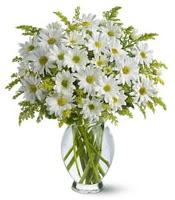 Vazo içerisinde beyaz krizantem çiçekleri  Muğla çiçek online çiçek siparişi