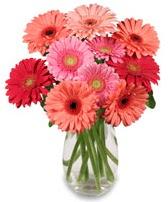vazo içerisinde 13 adet gerbera çiçeği  Muğla çiçek servisi , çiçekçi adresleri