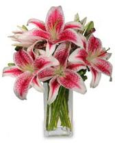 Vazo içerisinde 5 dal kazablanka çiçeği  Muğla İnternetten çiçek siparişi
