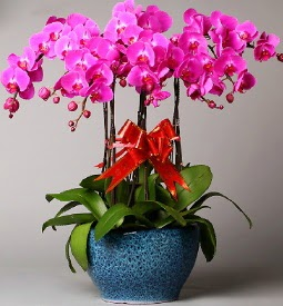 7 dallı mor orkide  Muğla çiçek satışı