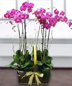 4 dallı mor orkide  Muğla çiçekçi mağazası