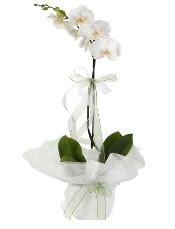 1 dal beyaz orkide çiçeği  Muğla yurtiçi ve yurtdışı çiçek siparişi