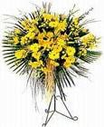 Muğla çiçek siparişi sitesi  Sari kazablanka Ferforje