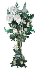 Muğla ucuz çiçek gönder  antoryumlarin büyüsü özel