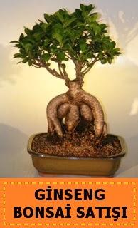 Ginseng bonsai satışı japon ağacı  Muğla çiçek yolla , çiçek gönder , çiçekçi