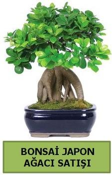 Bonsai japon ağacı satışı  Muğla uluslararası çiçek gönderme
