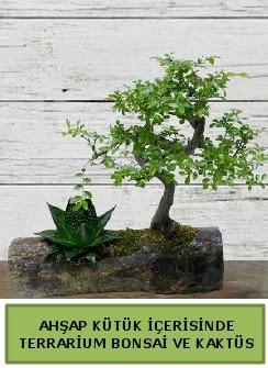 Ahşap kütük bonsai kaktüs teraryum  Muğla güvenli kaliteli hızlı çiçek