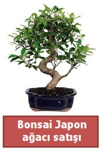 Japon ağacı bonsai satışı  Muğla çiçek servisi , çiçekçi adresleri