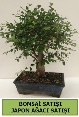Minyatür bonsai japon ağacı satışı  Muğla çiçek siparişi vermek