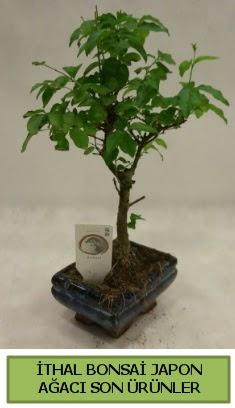 İthal bonsai japon ağacı bitkisi  Muğla çiçekçi telefonları