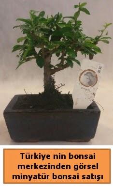 Japon ağacı bonsai satışı ithal görsel  Muğla online çiçek gönderme sipariş