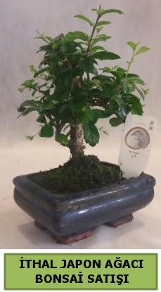 İthal japon ağacı bonsai bitkisi satışı  Muğla cicekciler , cicek siparisi